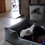 D-Wurf: Die Knuddelbären mit 6,5 Wochen